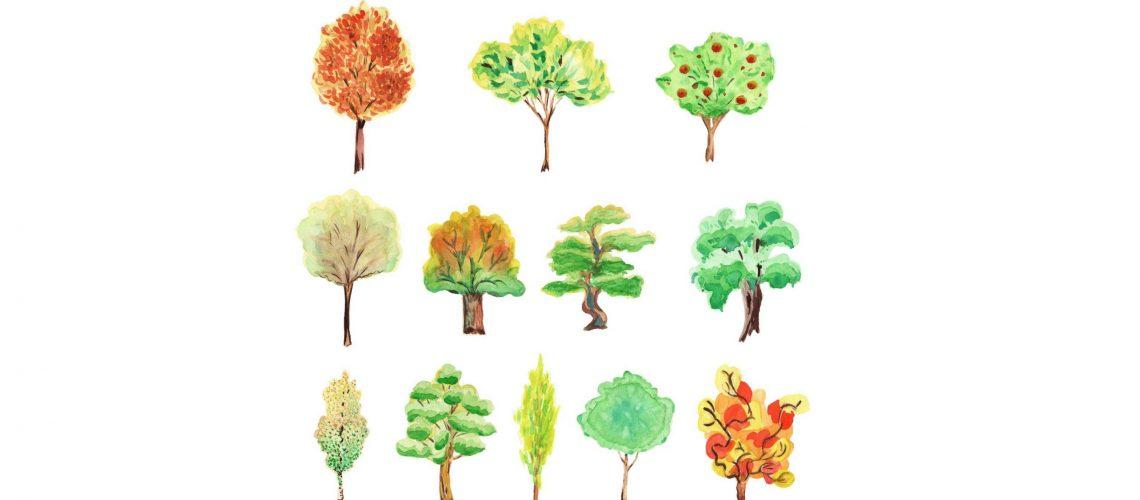 12 TREES