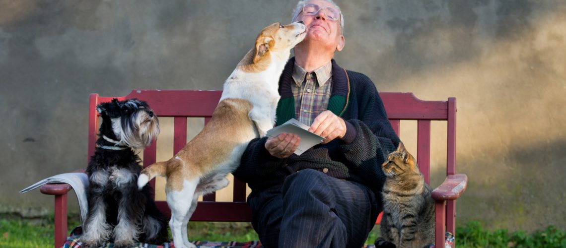 Senior,Man,With,Dogs,And,Cat,On,His,Lap,On