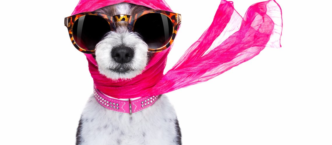 Chic,Fashionable,Diva,Luxury,Cool,Dog,With,Funny,Sunglasses,,Scarf