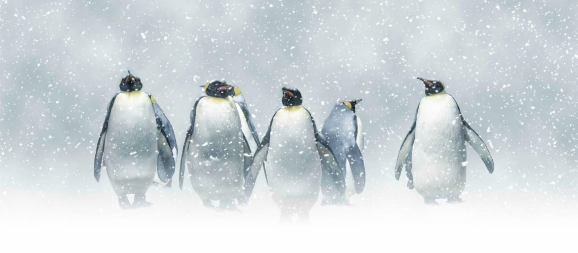 Group,Of,Emperor,Penguins,In,The,Middle,Of,A,Snowstorm